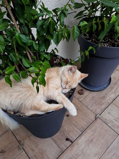 High angle view of cat sleeping in potted plant