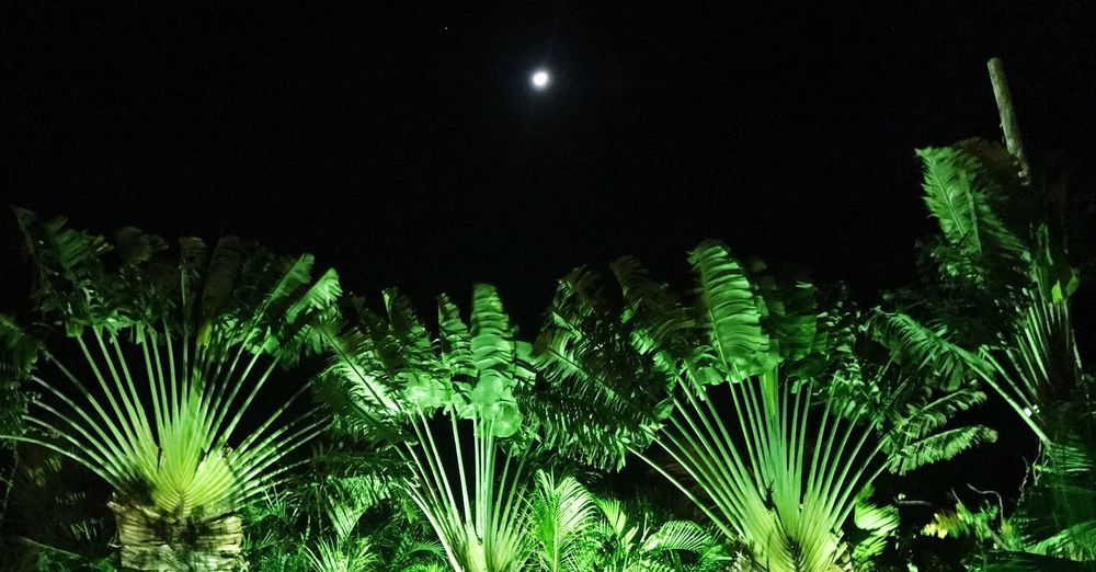 Nature Growth Night Beauty In Nature Green Color No People Tranquility Leaf Scenics Tranquil Scene Low Angle View Outdoors Sky Tree Astronomy traveling palms Moon In The Sky the week on EyeEm at gulf view resort, grassy key, Miramar Florida USA The Great Outdoors - 2017 EyeEm Awards