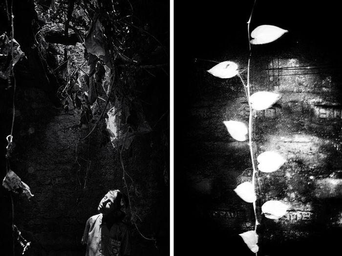 Illuminated lighting equipment hanging on tree at night