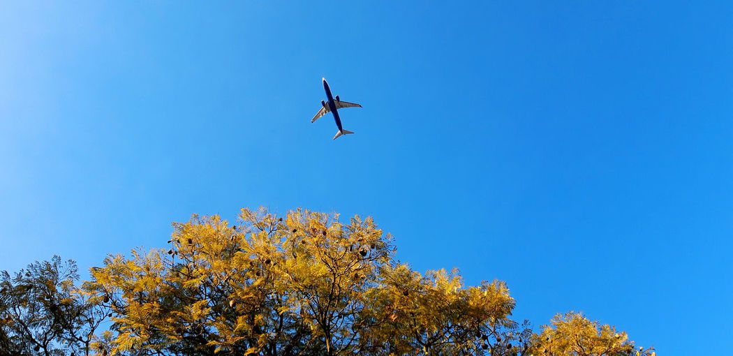 Airplane in clear blue sky with some leaves of the tree visible in the image. Flying Low Angle View Blue Sky Mid-air Air Vehicle Tree Airplane Clear Sky Mode Of Transportation Transportation Nature Plant No People Autumn Day Outdoors Change Travel Copy Space Aerospace Industry