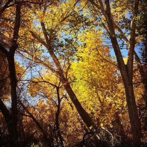 Fall at the Big Morongo Canyon Preserve Landscape Hiking Season  Autumn Autumn Colors Colors Of Autumn Fall Colors Fall Nature Outdoors