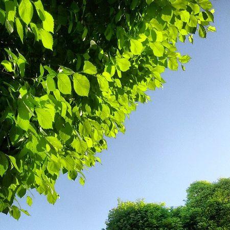 عکاسی رنگی زیبا هنر درخت برگ سبز Photography Green Tree Leaf Nature