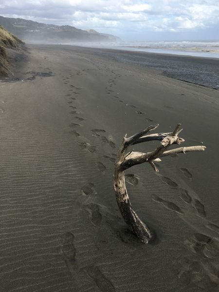 Driftwood reaches out of the sand on Muriwai Beach Beach Beauty In Nature Driftwood Nature No People Outdoors Sand Scenics Perspectives On Nature If Trees Could Speak Volcanic Sand