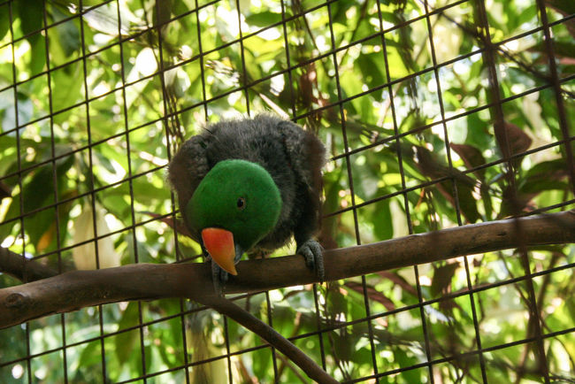 You lookin' at me? Animal Themes Animals In The Wild Beak Beauty In Nature Bird Branch Chainlink Fence Close-up Day Fence Focus On Foreground Green Green Color Nature No People One Animal Parrot Perching Philippines Tree Vibrant Color Zoology