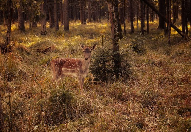 View of deer in the forest