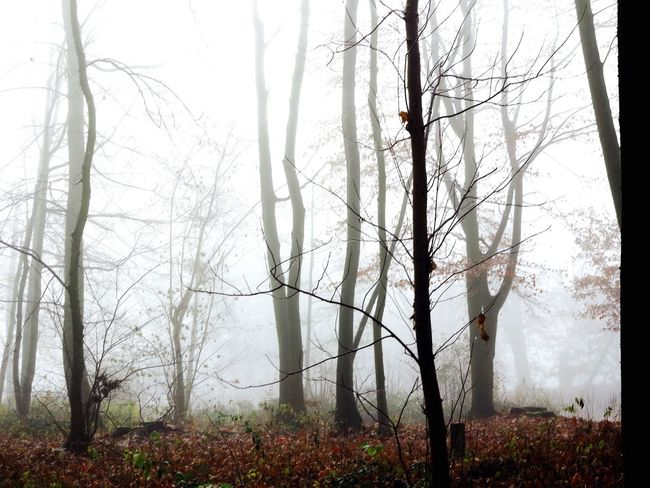 Beauty In Nature Fog Foggy Mist Outdoors Tree Nature Forest Branch No People Bare Tree Landscape Forest Fire Day WoodLand