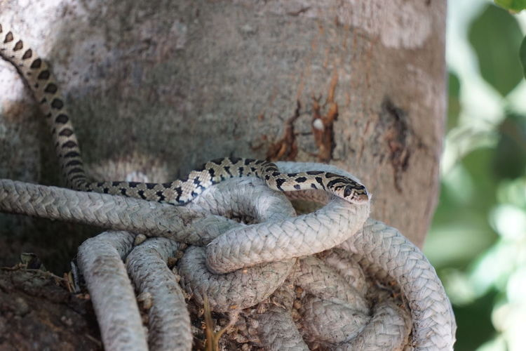 Snake Animals In The Wild Tree Trunk Mallorca Outdoors Beauty In Nature Nature Multi Colored