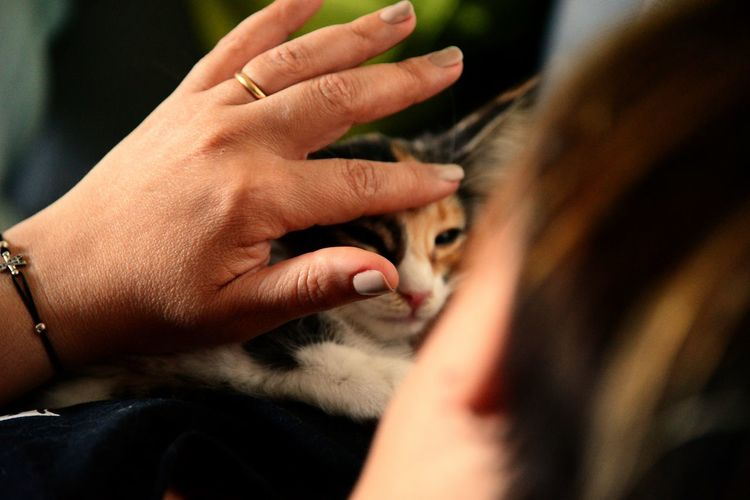 Cropped image of woman stroking cat