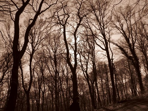 Atmospheric Mood Bald Trees Black & White Black And White Blackandwhite Forest Landscape Mystery Outdoors Sepia Sun And Trees Tranquility Tree Winter