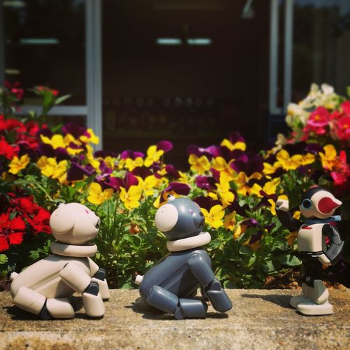 AIBO Aibobox ERS-300 Sonyaibo No People Latte Macoron Day Robot Dog Sony Happiness Flower Outdoors Sunny Day Green Spring Flower Head Garden Glass Leaf Blossom Nature Plant Toy