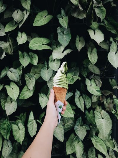 Green on green Leaf Human Body Part Human Hand Plant High Angle View Growth Green Color Day Outdoors One Man Only Close-up People Nature Adult Freshness Only Men Adults Only One Person