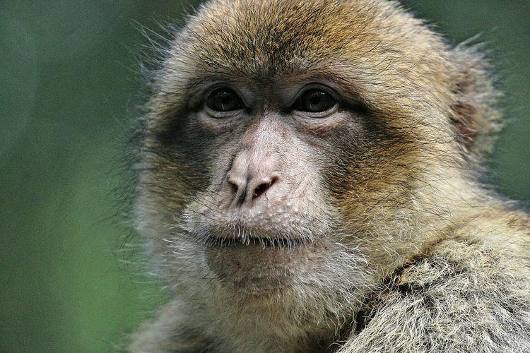 Monkey Ani.mals