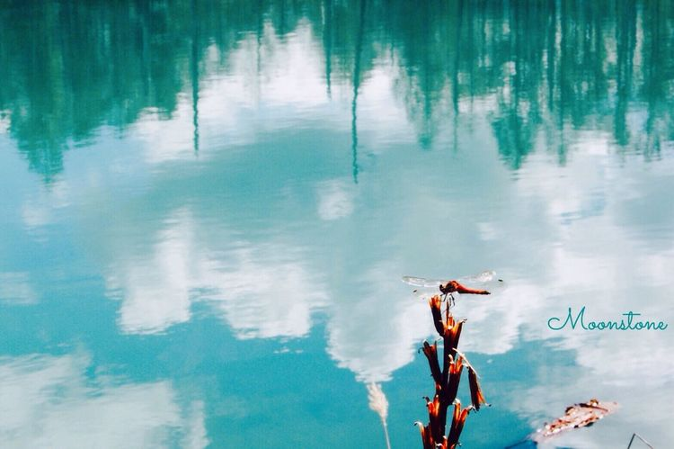 EyeEm Gallery From My Point Of View Reflection Pond Dragonfly Beauty In Nature Blue Water EyeEm Nature Lover EyeEm Best Shots Fine Art Photography Landscapes Fine Art Blue Sky Outdoors Contrast 美瑛
