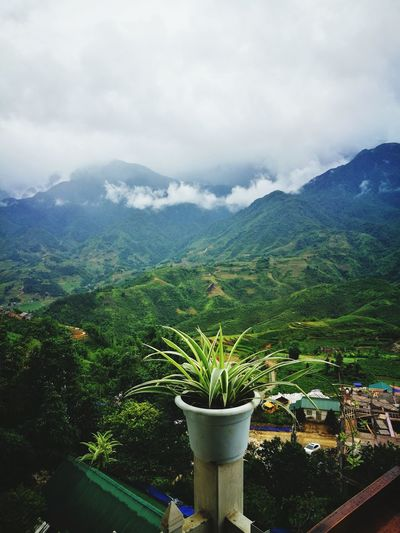 SAPA VIETNAM. Plant Mountain Tree Agriculture Landscape Scenics Beauty In Nature Freshness Beauty In Nature Lifestyles Agriculture Sky No People Holidays ☀ Love Photograph Me, My Camera And I