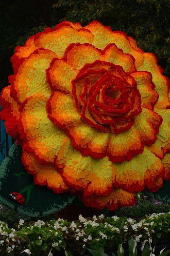 Ballarat Botanic Gardens Begonia Lego Sculpture Flower No People Close-up Flower Head Red Outdoors Day