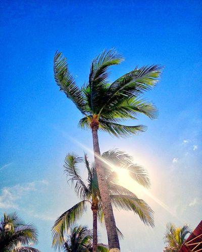 Travel Ocean New Photo Bahamas Nassau Ship Life Beach New Land Trip Wood Trip Photo Island Palm Tree Tree Low Angle View Growth Nature Blue Sky No People Clear Sky Beauty In Nature