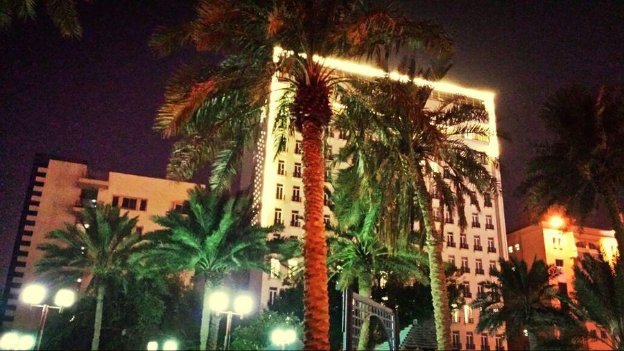 Hotel TreePorn Night Nightphotography