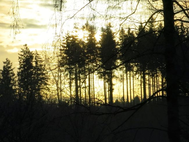 TreePorn Onmywaytowork Sunrise... Hugging A Tree Sunrise_Collection Sky Collection