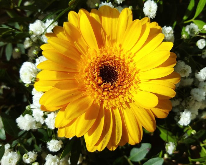 Gerbera Yellow Flower Yellow Gerbera Daisy Flowers Garden Photography Colourful Florist Boquet Of Flowers