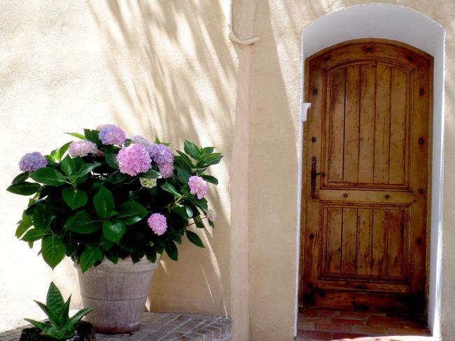 Door Outdoors Architecture Flower Hydrengea Style Mediterranean