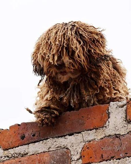 El mechas Animals Animal Mascotas 🐶 Leslie_Gr_In Dog Perros