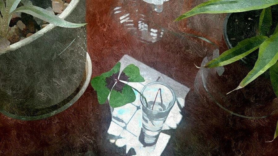 Trebol de cuatro hojas del jardin de los abuelos Trebol De Cuatro Hojas Trebol Suertudos Casadelosabuelos Puebla Mexico Pixlr