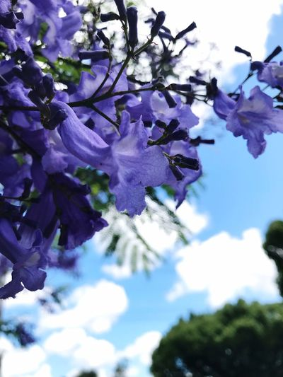 IPhoneography Summer Memories 🌄 Sky And Clouds Flower Beauty In Nature Fragility Freshness Nature Growth Petal Blossom Day Purple No People Close-up Outdoors Flower Head