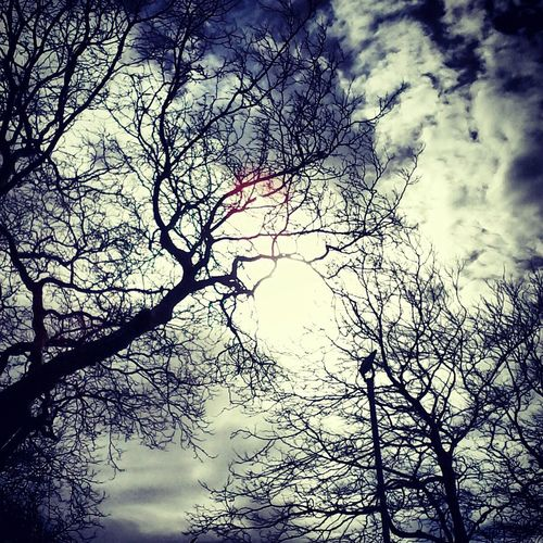 La Luz De La Noche Branches Moonlight Through The Trees ... Check This Out Sky And Clouds Sky Collection Eyemnaturelover For The Love Of Photography ...