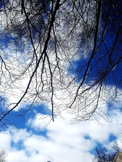 Bare Branches Tree Backgrounds Branch Sky Cloud - Sky