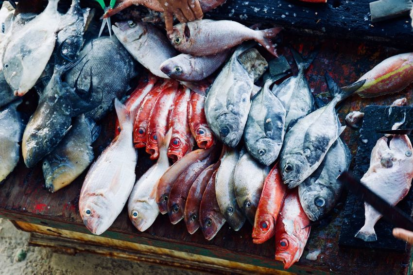 Fish Market Guarapari Seafood Abundance Animal Choice Fish Fish Market Fishing Fishing Industry Food Food And Drink For Sale Freshness Healthy Eating Market Omega 3 Omega 3 Fatty Acids Raw Food Retail  Sale Sea Seafood Variation Vertebrate Wellbeing The Still Life Photographer - 2018 EyeEm Awards