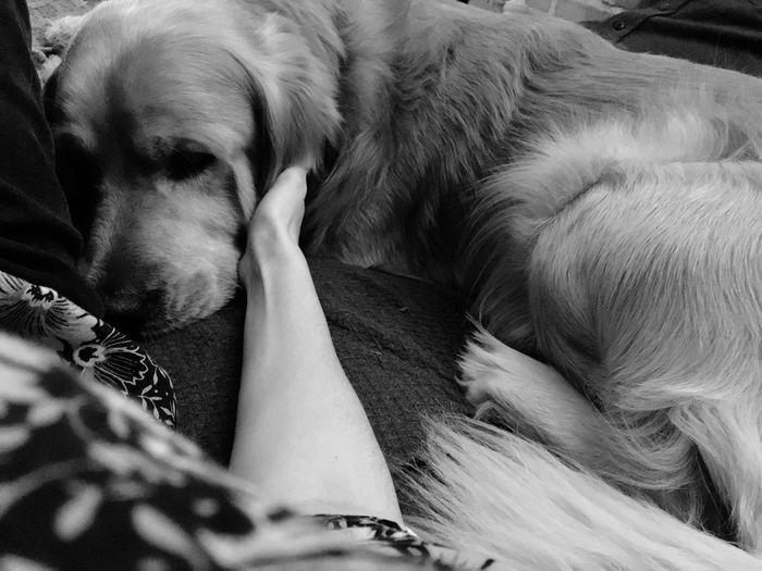 Close-up of dog sleeping on sofa