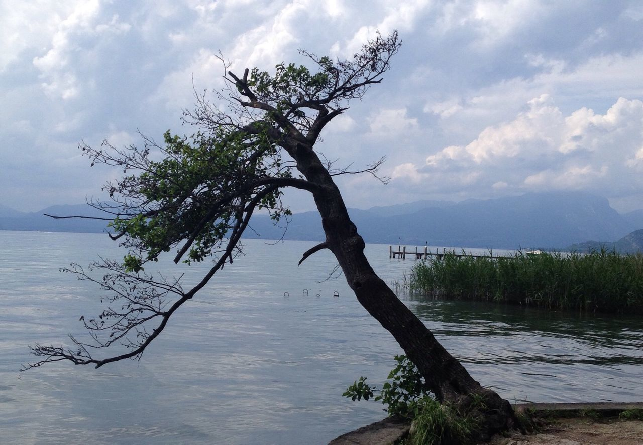 sky, tree, nature, tranquility, cloud - sky, scenics, beauty in nature, water, outdoors, tranquil scene, landscape, no people, day, branch