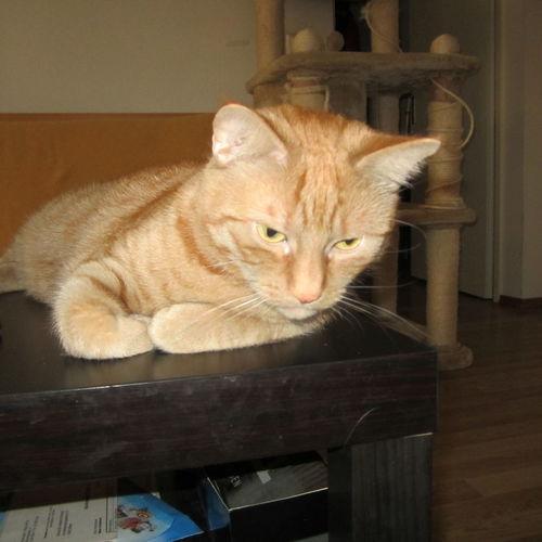 I Love My Cat Mein Liebling Canon Ixus 115 HS Februar 2014