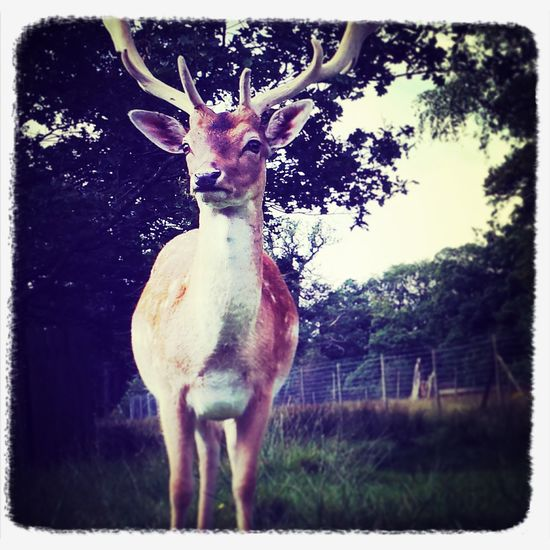 Nature Deer Sanctuary Amazing Creatures