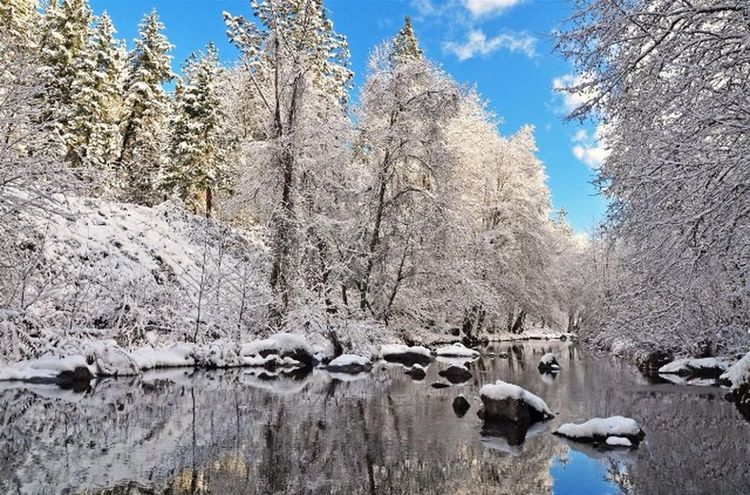 Neige Hiver Nature Froid Blanc Arbre