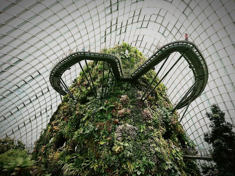 Man-made Mountain Day Green Color Indoors  Growth Manmadestructures Garden Gardens By The Bay Gardensbythebay Cloud Forest Dome Dome Indoors  Clear Skies Xperiaphotography Xperiaxzcam