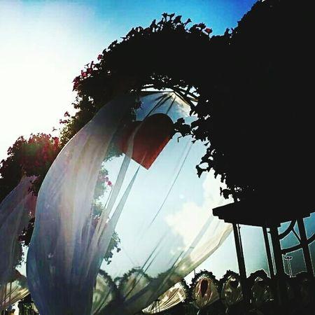 Glitch miracle garden