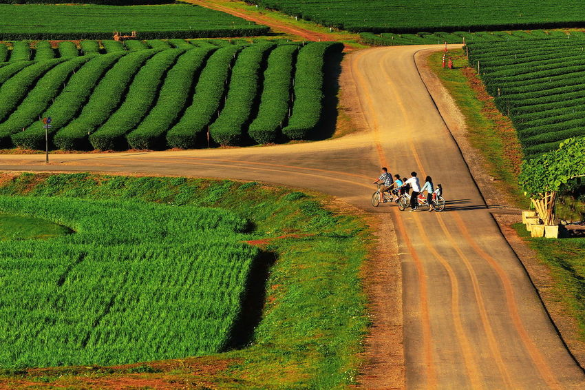 Bicycles Trip In Tea Farm. Agriculture Beauty In Nature Bicycle Trip Bicycles Bicycling Day Farm Field Green Color Growth Landscape Nature Outdoors Recreation  Rural Scene Scenics Tpip Travel Working