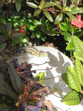 Nature Photography Nature Love To Take Photos ❤ Animal Photography Summer ☀ Sunsetlover Springtime Pretty♡ Hasenglück Marie Hannah CSI