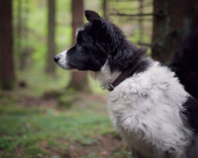 Dog in forest One Animal Domestic Pets Domestic Animals Mammal Animal Themes Canine Animal Dog No People Focus On Foreground Looking Away Side View Outdoors Nature