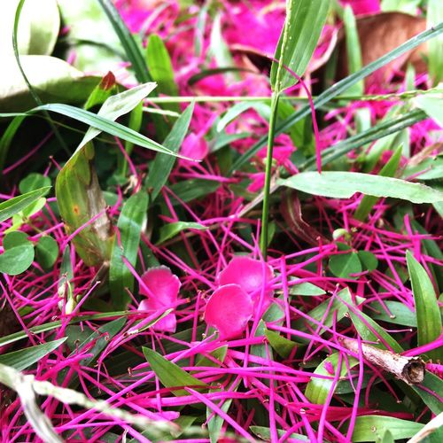 Pink tree petals Beauty Pink Flowers Petals Plant Growth Plant Part Leaf No People Day Beauty In Nature Nature Selective Focus Focus On Foreground Close-up Green Color Tranquility Pink Color Outdoors Freshness High Angle View Land Full Frame Red
