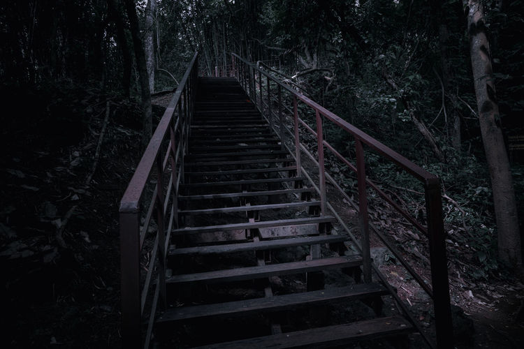 Low angle view of staircase in forest