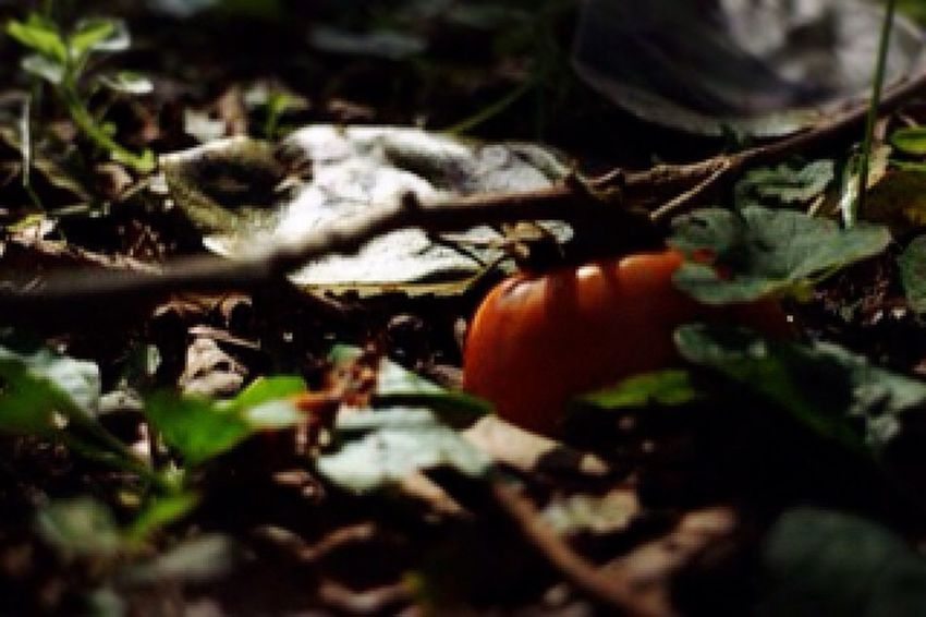 山道をお写んぽ。秋の香りのする落し物。深まる秋を感じる1日でした(*'͜' )⋆* Enjoying Life Relaxing Relaxing 秋