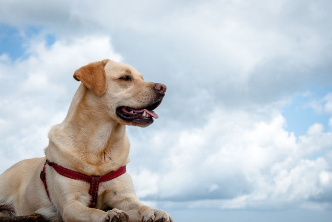 Gilda Dog Animal Themes One Animal Domestic Animals Pets Domestic Looking Away Canine Sky Cloud - Sky Animal No People Day Sitting