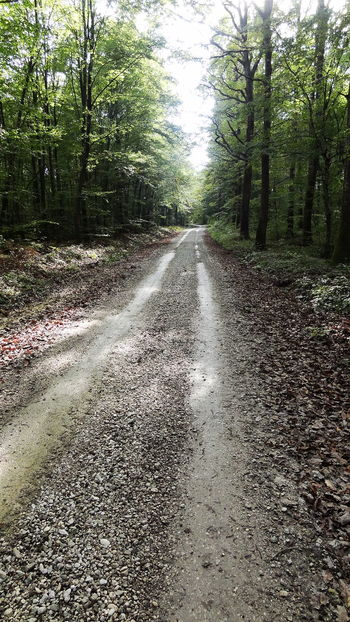 Beauty In Nature Country Road Countryside Day Empty Road Forest Forest Path Macadam Nature No People Non-urban Scene Outdoors Road The Way Forward Tree