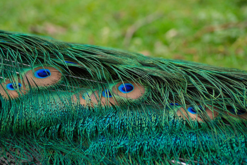 Cropped image of peacock at zoo