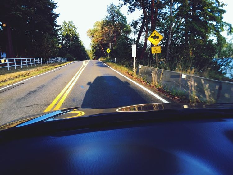 My Commute Through My Windshield On The Road On The Move Driving Shadows Travel Road Sign Road Marking Port Townsend