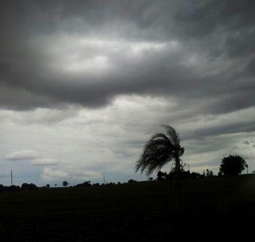 Natureza Diaenoite Tempestade
