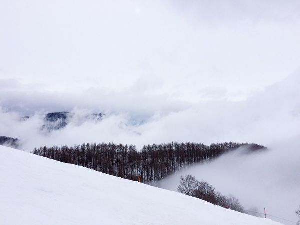 Snow Snow ❄ Mountains Mountain Mountain View White Tree Trees Clouds Clouds And Sky Cloud Sea (雲海) Cloud Sea Sea Of clouds Seaofclouds Gunma Japan EyeEm Nature Lover EyeEm EyeEm Best Shots - Nature Eyeemphotography EyeEm Best Shots - Landscape Landscape Landscape_photography Snow Mountain Winter Wintertime