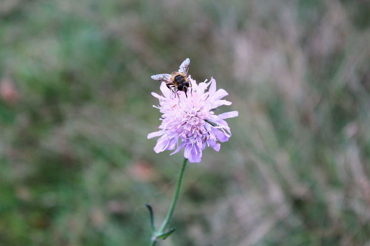 Animal Themes Animal Wildlife Animals In The Wild Beauty In Nature Close-up Day Flower Flower Head Fragility Freshness Growth Insect Nature No People One Animal Outdoors Petal Pink Color Plant Pollination Purple Thistle